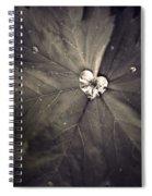 May 11 2010 Spiral Notebook