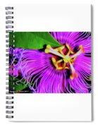 Maypop Spiral Notebook