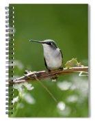 Meadow Hummingbird Spiral Notebook