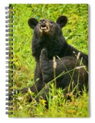 Meadow Itch Bear Spiral Notebook