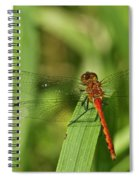 Meadowhawk Dragonfly Spiral Notebook
