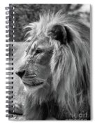 Meditative Lion In Black And White Spiral Notebook