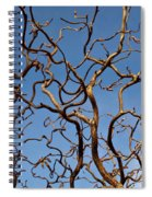 Medusa Limbs Reaching For The Sky Spiral Notebook