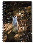 Meerkat     Say What Spiral Notebook