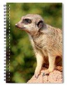 Meerkat 1 Spiral Notebook