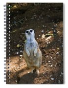 Meerkat Poising Spiral Notebook