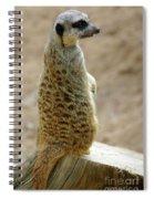 Meerkat Portrait Spiral Notebook