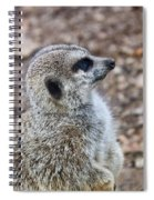 Meerkat Portrait Spiral Notebook