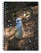 Meerkat Responding Spiral Notebook
