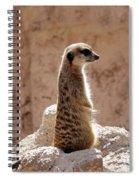 Meerkat Standing On Rock And Watching Spiral Notebook