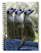 Meerkats On The Lookout Spiral Notebook