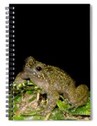 Mehu�n Green Frog Spiral Notebook