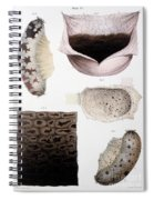 Melanoma, Blood And Stomach Spiral Notebook