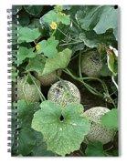 Mellon 2 Spiral Notebook