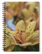 Mellow Yellow Spiral Notebook