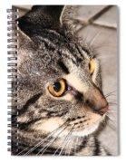 Melvin The Wondercat Spiral Notebook