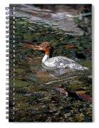 Merganser And Spawning Salmon - Odell Lake Oregon Spiral Notebook