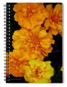 Merry In Gold Spiral Notebook