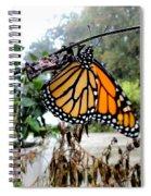Metamorphosis Of The Monarch Spiral Notebook
