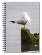 Mew Gull On A Piling Spiral Notebook