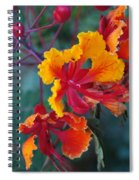 Mexican Bird Of Paradise  Spiral Notebook