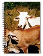 Mexican Cattle Spiral Notebook