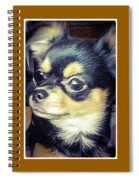 Mexican Chihuahua Puppy Spiral Notebook
