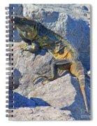 Mexican Iguana Spiral Notebook
