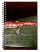 Mexican Palm Salamander Spiral Notebook