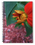 Mexican Sunflower In Mid Bloom Spiral Notebook