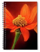 Mexican Sunflower Spiral Notebook