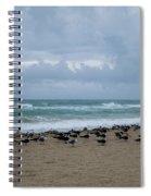 Miami Beach Flock Of Birds Spiral Notebook