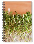 Micro Green Spiral Notebook