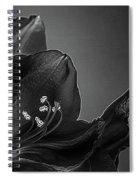 Midnight Blue Amy Bw Spiral Notebook
