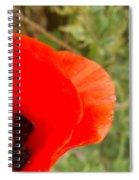 Midsummer Poppy Spiral Notebook