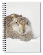 Miffed Mountain Hare Spiral Notebook