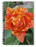 Mike's Hybrid Tulip Spiral Notebook