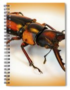 Military Stag Beetle Spiral Notebook