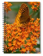 Milkweed And A Frittalary Spiral Notebook