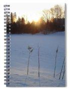 Milkweed In February At Sunrise Spiral Notebook