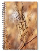 Milkweed In The Breeze Spiral Notebook
