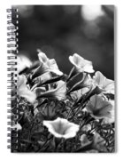 Mill Hill Inn Petunias Black And White Spiral Notebook