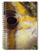 Milletseed Butterflyfish Spiral Notebook