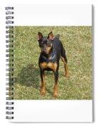 Minature Pinscher Mica Spiral Notebook