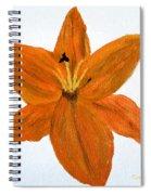Mini #119 Spiral Notebook