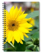 Mini Sunflower And Bud Spiral Notebook