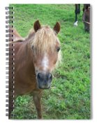 Miniature Horse Spiral Notebook