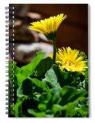 Miniature Yellow Gerbera Daisies Spiral Notebook