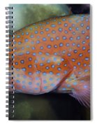 Miniatus Grouper - Cephalopholis Miniata Spiral Notebook