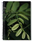 Golden Ratio In Nature Spiral Notebook